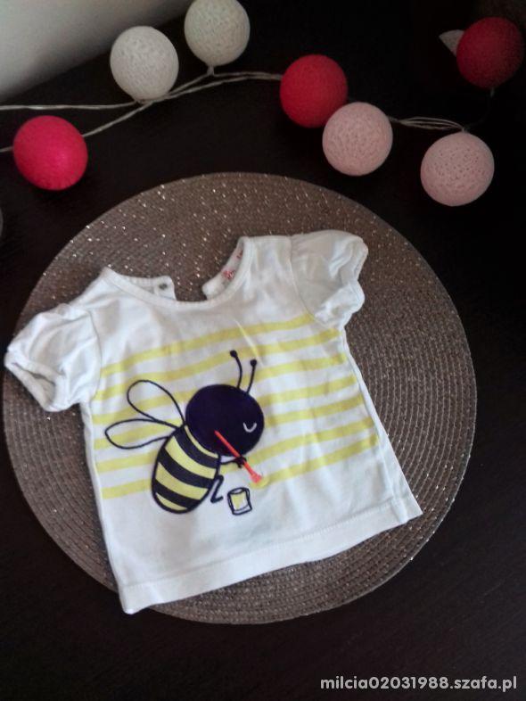 bluzka pszczolka