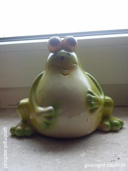 skarbonka żabka