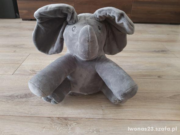 Popularny słoń akuku